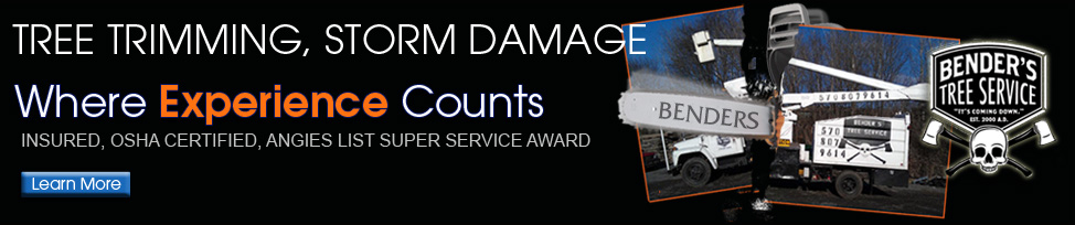 Tree Service handling storm damage, trimming, cutting, removal, pruning, bucket truck and crane work for all your needs