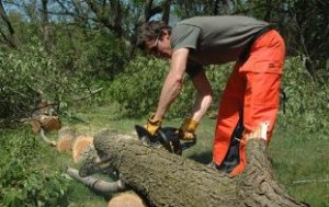 Bender's Tree Service Reviews